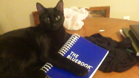 Cat holding a copy of The Bluebook