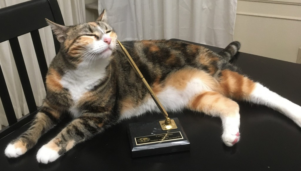A cat sits on a table with eyes closed posing behind an award